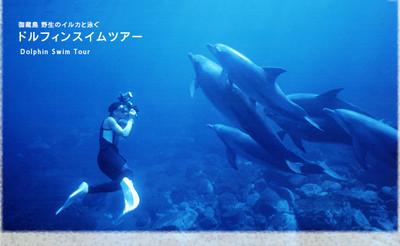 Dolphinimage001